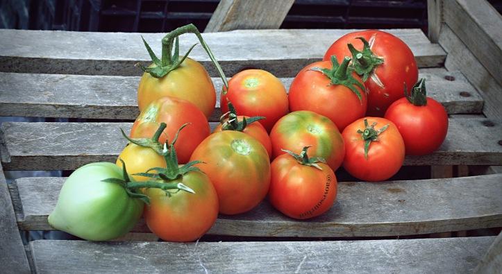 aove_tomates